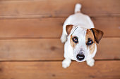 Dog at on wooden floor