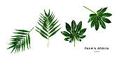Green palm and aralia leaves collection