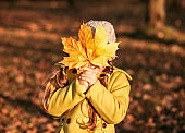 little girl covers her face with a large orange maple leaf