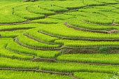 Green rice fields on terraced of Mea La Noi, Thailand