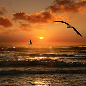 beautiful tropical orange color sunset with sailboat and flying seagull