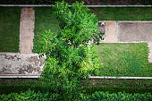 Garden Tree With Green Foliage and Beautiful Branch From Above Angle View, Nature Background of Tropical Tree for Decoration Building Outdoors Gardening. Natural Environment