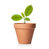 Young plant in flower pot