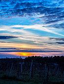 Dusky Darkening Purple Orange Yellow Sunset Over Vineyard