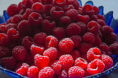 Ripe raspberries close up. Sunlight on the berry