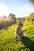 cute striped cat sitting on green grass in a Sunny spring garden and plays
