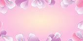 Petals Roses Flowers. Pink Purple Sakura petals frame isolated on soft peach background. Vector
