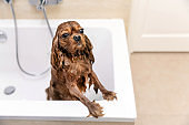 Funny wet dog in bathtub