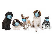 Happy Group of Puppies Wearing Protective Face Masks