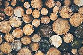 Side view of well arrange chopped firewood logs