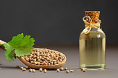 Glass bottle of coriander essential oil with fresh cilantro leaf on rustic table, aromatherapy massage oil concept ( coriandrum sativum )