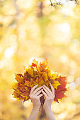 Bouquet of yellow, red and orange maple leaves in human hands in the forest outdoor. Blur autumn background, vertical photo, selective focus