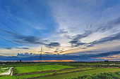 Landscape of green paddy rice farm during storm cloud sunset