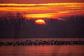 Flock of birds on the winter lake at sunrise
