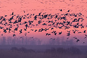 Flying birds over the winter lake at sunrise