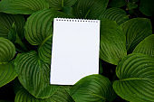 Blank spiral notepad on green nature background, space for text