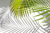 leaves of coconut palm tree and shadow isolated on white