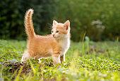 Portrait Of Ginger Kitten On Field on green grass