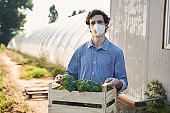 Curly young man gathering vegetables on farm