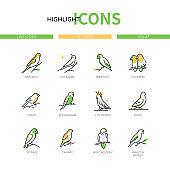 Pet birds - modern line design style icons set