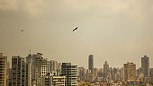 Birds flying across the Mumbai skyline, India