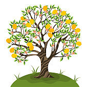 Lemon tree isolate on a white background. Vector graphics.