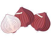 Onion vector illustration, vegetable icon