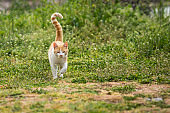 redhead kitten playing on the grass in the yard. cat catches mouse.