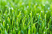 Beauty backgrounds with foliage, green grass, dew drops and bokeh, banner with copy space