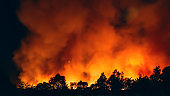 Forest fire at night, wildfire after dry summer season, burning nature