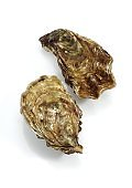 French Oyster called Marennes d'Oleron, Fresh Seafood against White Background