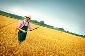 The agronomist looks at the harvest of wheat.
