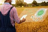 Farm worker in wheat field with digital tablet