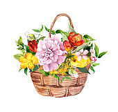 Beautiful flowers, floral bouquet in basket. Vintage illustration for print, label, card. Watercolor for anniversary, birthday, mother day