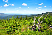 Summer landscape in National Park Sumava.