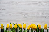 Row of yellow tulips on white rustic wooden background with space for message. Concept Hello Spring flowers. Holiday greeting card for Valentine's, Women's, Mother's Day, Easter! Top view, flat lay.