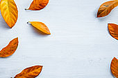 seasonal fall collection on white background