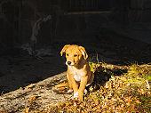 Golden cute puppy playing in winter garden outdoor