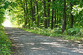 Gravel road surrounded by green forest