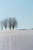 Winter grove on a snowy hill and the blue sky
