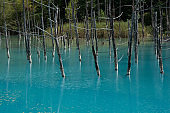 Rippled blue pond surface in summer