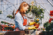 Florists woman working with flowers in a greenhouse. Young woman working in flower garden. Woman entrepreneur