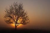 Sunrise behind a tree in very dense fog.