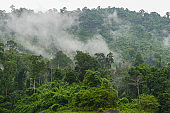 Fogs cover the green forest.