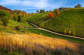 Autumn rural scenery with grazing cows and colorful deciduous trees
