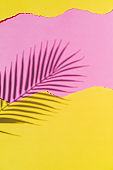 Tropical shadow of palm leaf branch. Pink and yellow torn paper background. Summer theme. Beach concept
