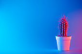 Creative neon background with cactus. Multicolor abstract backdrop with vibrant gradients. Exotic plants with pink, red and blue vivid colors. Thorns with beautiful illumination.