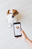Woman hand with mobile smart phone taking a photo of a cute small dog over white background. Indoors portrait. Happy dog looking at the camera.