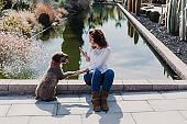 beautiful young woman having fun with her cute brown dog and taking a picture with mobile phone. Love for animals concept. Outdoors