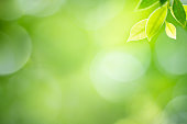 Fresh green leaf under sunlight for nature on blurred and bokeh background with copy space for text.